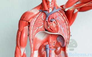 Проявление микозов на внутренних органах человека