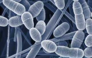 Грибковое инфекционное заболевание – бластомикоз