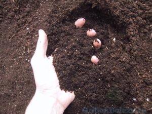 Контакт с почвой