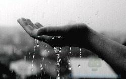 Влажная среда